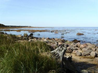 Ломоносовский район - Финский залив